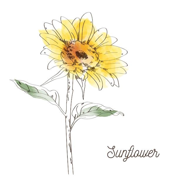 Yellow sunflower illustration design on white background Premium Vector