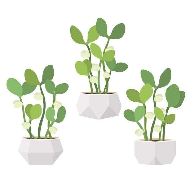 Молодые свежие зеленые ростки в белых горшках. новая жизнь растений. плоский рисунок Premium векторы
