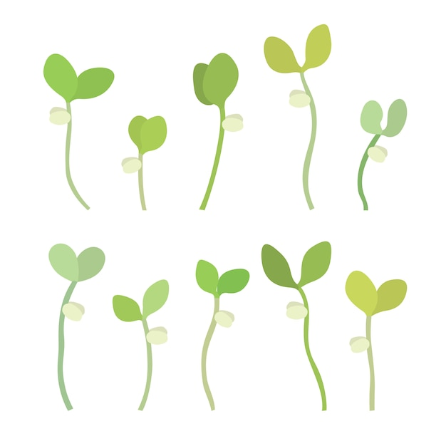 Young fresh single green sprouts vector illustration Premium Vector