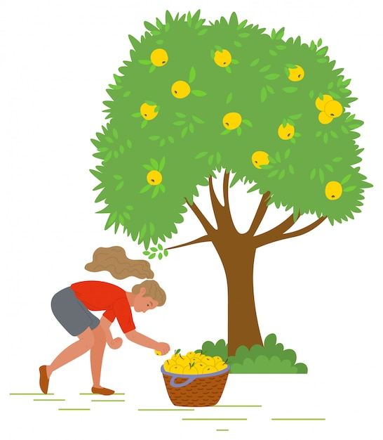 Young girl picking yellow apples vector image Premium Vector