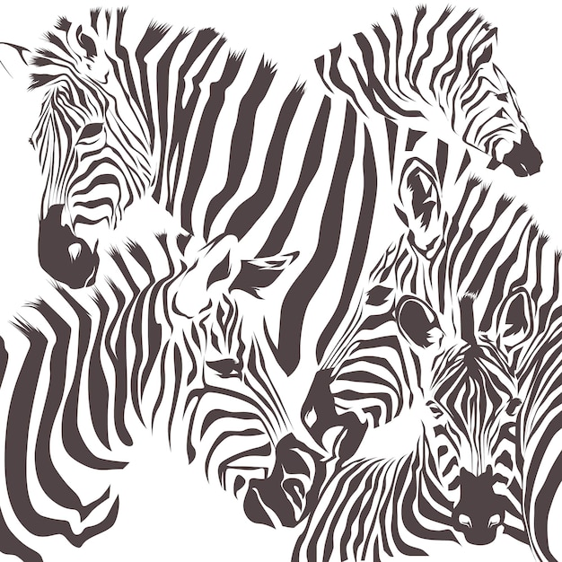 Zebra animal vector Premium Vector