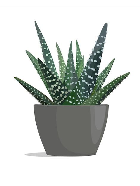 Zebra cactus in dark pot on white background. Premium Vector