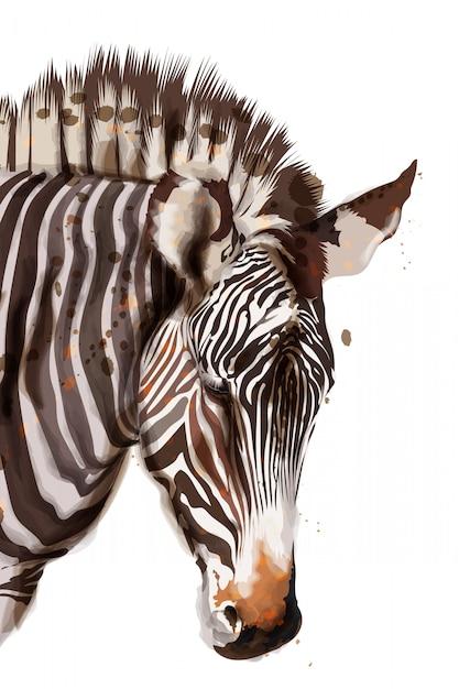 Zebra watercolor illustration Premium Vector