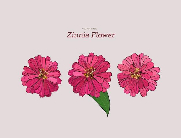 Zinnia Flower Hand Drawing Premium Vector