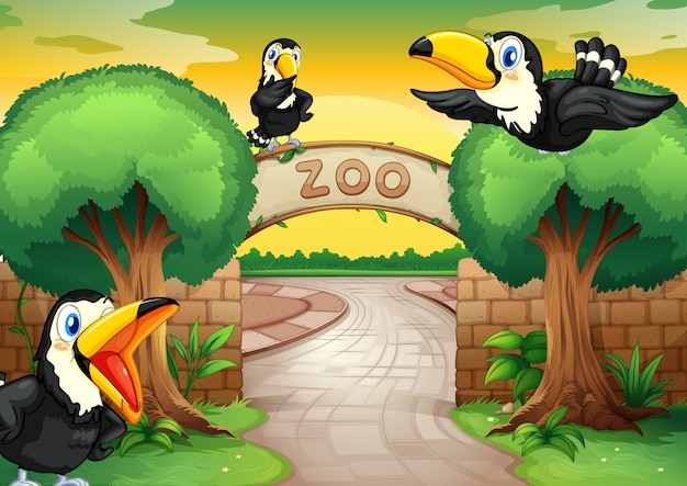 Zoo and birds Free Vector