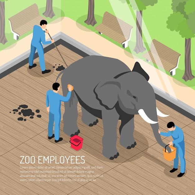 Lavoratori dello zoo con strumenti professionali durante l'alimentazione e il lavaggio dell'elefante e la pulizia della sua casa isometrica Vettore gratuito