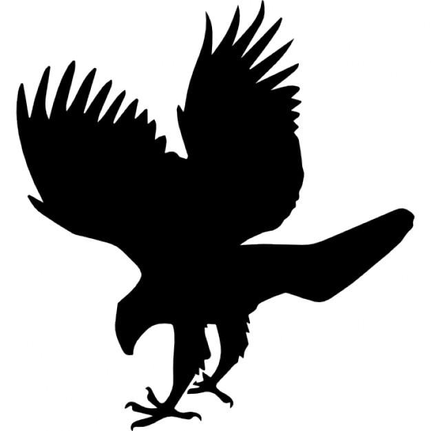 Falke Vektoren Fotos Und Psd Dateien Kostenloser Download