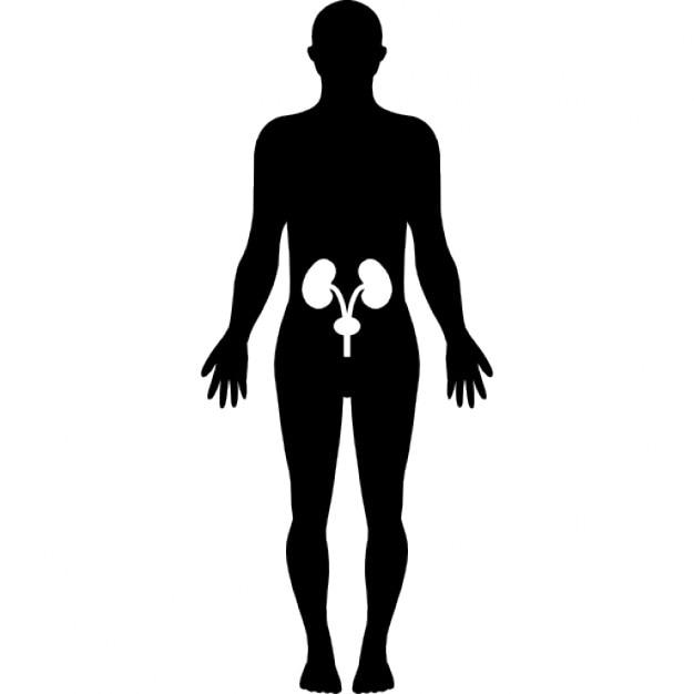 Menschlichen Hüfte Knochen in einer stehenden männlichen Körper ...