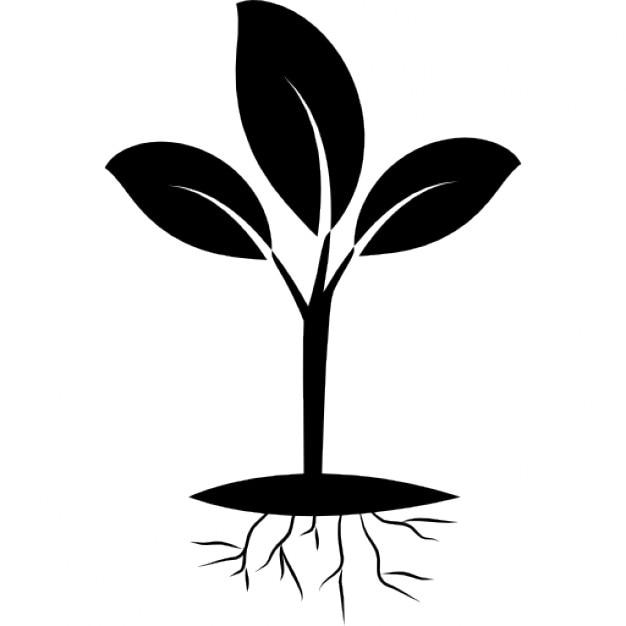 Pflanze und Wurzel | Download der kostenlosen Icons
