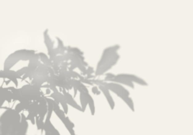 Der schatten einer exotischen pflanze auf einer weißen wand. Premium PSD