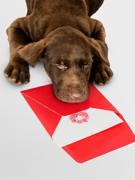 Entzückender labrador-apportierhund, der auf ein liebesbriefmodell schläft Kostenlosen PSD