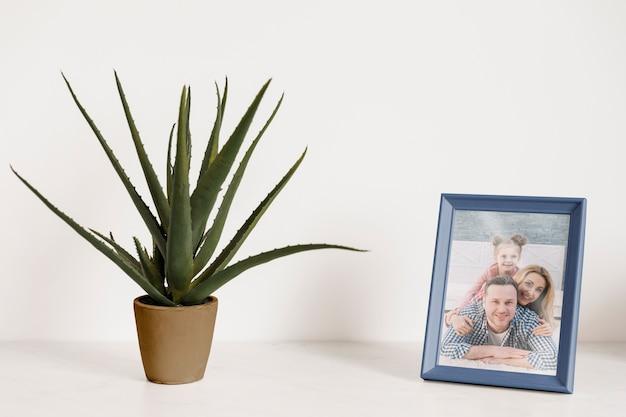 Frame-modell neben einer pflanze Kostenlosen PSD