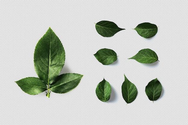 Grüne blätter isoliert Premium PSD