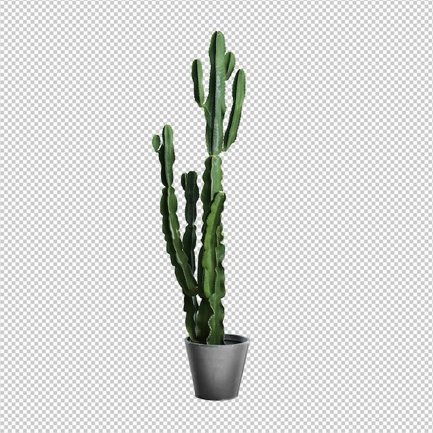 Kaktus über weißem hintergrund Premium PSD