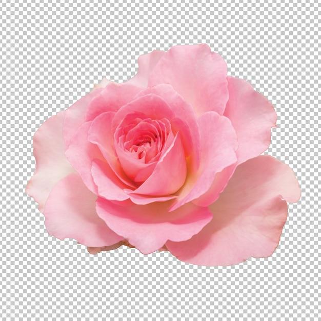 Rosarosenblumen auf transparentem Premium PSD