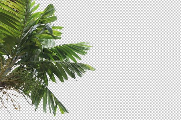 Tropische baumblätter und zweigvordergrund Premium PSD