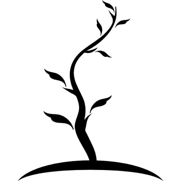 rbol de forma fina de tronco joven con pocas hojas