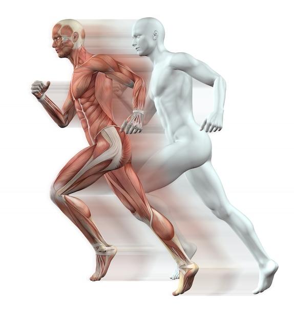 3d rendent des personnages masculins courir avec la peau et le muscle carte Photo gratuit