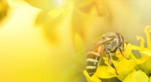 Abeille sur fleur jaune nature fond jaune Photo Premium