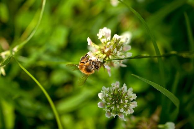Abeille sur une fleur Photo Premium