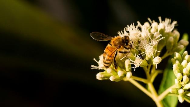 Abeille à la recherche de pollen Photo gratuit
