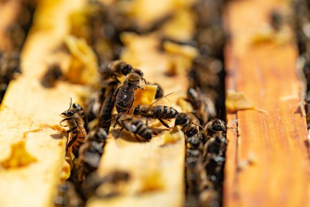 Les abeilles apportent du miel à leurs ruches par temps chaud toute la journée Photo Premium