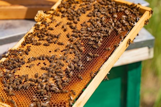 Abeilles assidues sur un nid d'abeilles dans un rucher Photo Premium
