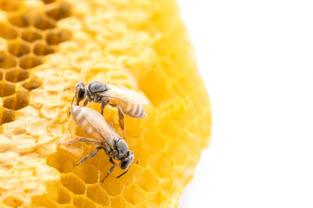 Abeilles Macro Sur Shoot Studio En Nid D'abeille Et Isolé Sur Blanc Photo Premium