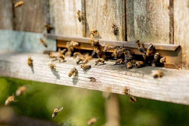 Abeilles Retournant à La Ruche Et Entrant Dans La Ruche Avec Le Nectar Floral Collecté Et Le Pollen De Fleurs. Nuée D'abeilles Récoltant Le Nectar Des Fleurs. Miel De Ferme Biologique Sain Photo Premium