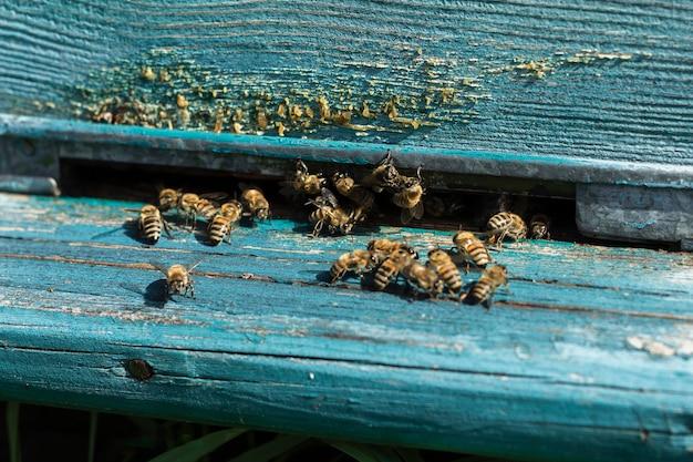Abeilles sortant de la ruche à la ferme Photo gratuit