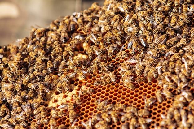 Abeilles travaillant sur nid d'abeille Photo Premium