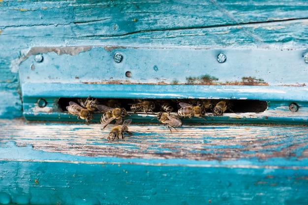 Les abeilles volent à l'abri des preuves Photo Premium