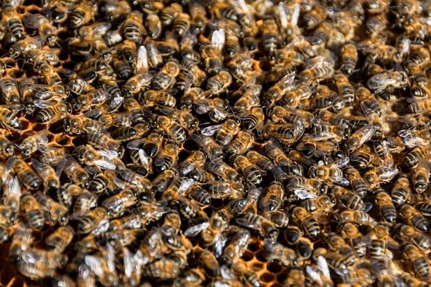 Des abeilles Photo gratuit