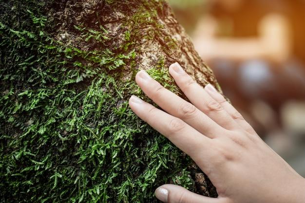 Abondance de la forêt les femmes frottent la mousse verte sur l'arbre. Photo Premium