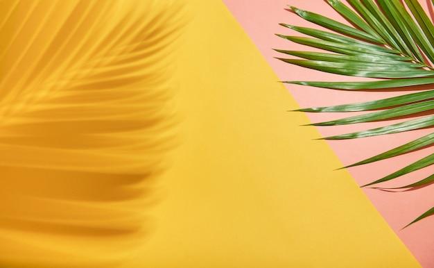 Abstrait feuille de palmier et ombre sur fond coloré Photo Premium