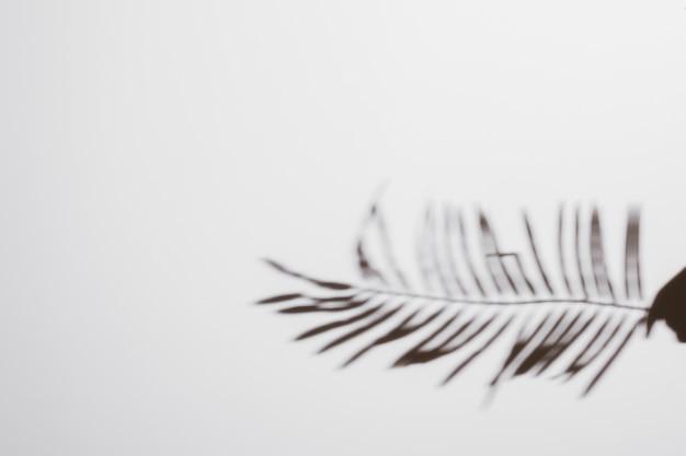 Abstrait naturel laisse ombre sur fond blanc Photo gratuit