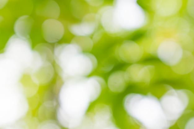 Abstrait vert bokeh Photo Premium