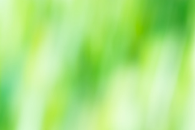 Abstrait vert flou fond Photo Premium