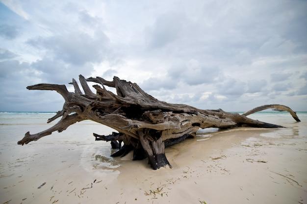 Accrochage au bord de l'océan Photo Premium