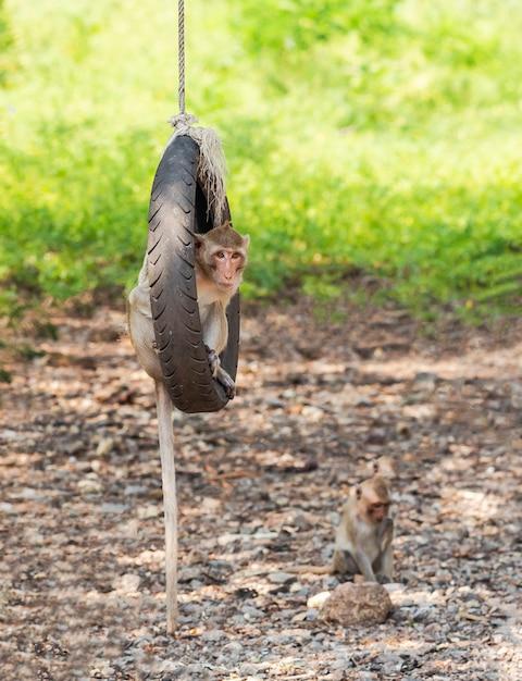 Les activités des petits singes par une journée ensoleillée Photo Premium