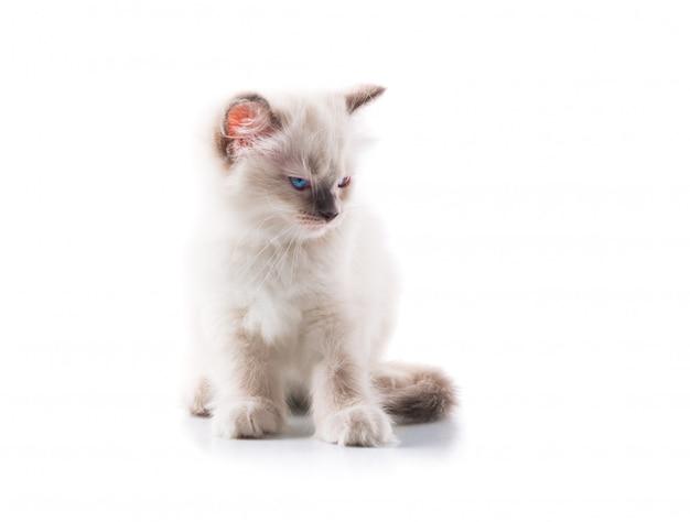 Adorable chat sur fond blanc isolé Photo Premium