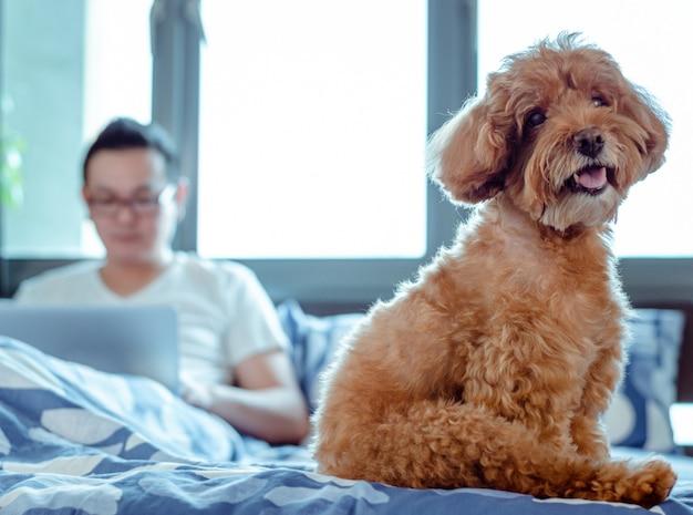 Un adorable chien caniche brun qui regarde la caméra lorsqu'il est heureux et heureux Photo Premium