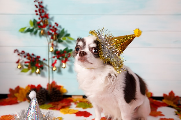Adorable Chien Chihuahua Portant Un Chapeau Conique Du Nouvel An Festif. Photo Premium