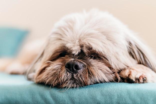 Adorable Petit Chien Relaxant Photo Premium