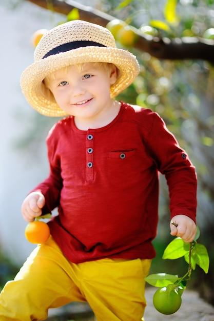 Adorable petit garçon au chapeau de paille cueillette mandarine mûre fraîche dans le jardin ensoleillé de la mandarine en italie. Photo Premium