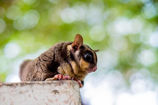 Un adorable planeur en sucre chubby grimpe sur la table dans le jardin. Photo Premium