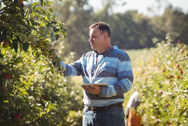 Agriculteur à l'aide de tablette numérique tout en inspectant un pommier dans un verger de pommiers Photo gratuit