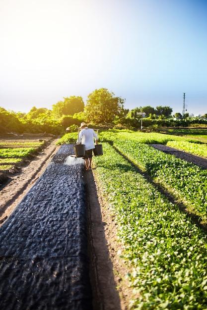 Un agriculteur arrose la ferme Photo gratuit