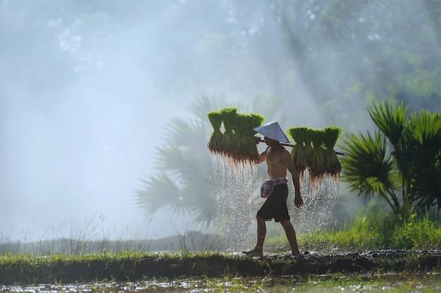 Agriculteur Asiatique Portant Des Semis De Riz Sur Le Dos Avant La Culture En Rizière Photo Premium