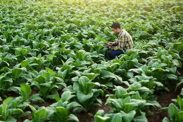Agriculteur asiatique à la recherche d'une plante dans une ferme de tabac Photo Premium
